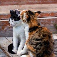Оставь меня, сестрёнка, я в печали! :: Irina-77 Владимировна