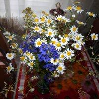 Цветы полевые. :: Владимир Драгунский