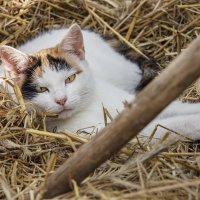 We sleep in the hay :: Евгений Улащик