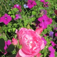 Царица цветов со свитой :: Дмитрий Никитин