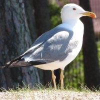 чайка :: Валерий A.