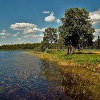 На берегу Валдайского озера... :: Sergey Gordoff