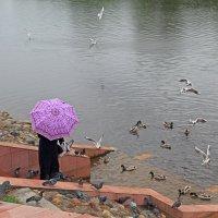 Дождь :: Наталья Кузнецова
