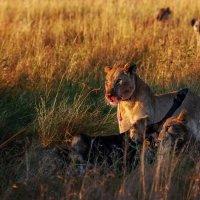 Удачная охота...Танзания! :: Александр Вивчарик