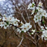 Вспоминая весну... :: Светлана