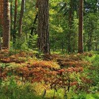 Остывают в листьях соки лета... :: Лесо-Вед (Баранов)