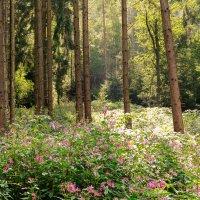 прогулка по лесу. :: Ирина ...............
