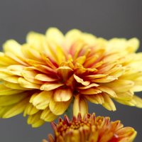 Цветок :: Erizo Espinoso