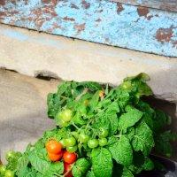 Всё о сельском хозяйстве или мой огород... :: Михаил Болдырев