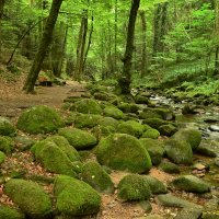 В лесу :: Николай Танаев