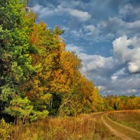 Дорога вдоль леса :: Лара Симонова