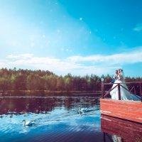 Лебеди лебеди лебеди ... :: Артур Хорошев