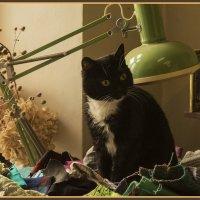 Кот-хранитель лоскутков. :: Марина Никулина