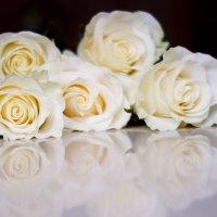 Розы :: Марина Киреева
