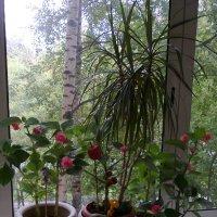 на балконе :: Андрей