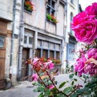 Pink street :: Alena Kramarenko
