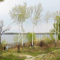 Весенний день у реки :: Александр Бурилов