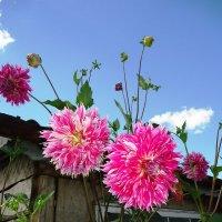 Скоро осень, за окнами август :: Лариса Рогова