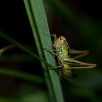 в ночной траве :: Александр Прокудин