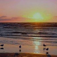 Чайки на берегу вечернего моря :: Михаил Новиков