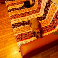 Собака Дуся   и диван :: Павел Нарышкин