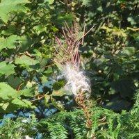 И полетели семена... :: Natalia Harries