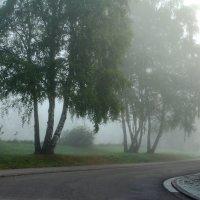 Утренний туман. :: Людмила Шнайдер