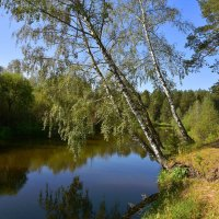 На берегу реки Туры. :: Наталья