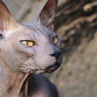 Пещерный кот :: Mike214