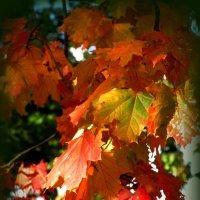 Осенние краски :: Сергей Карачин