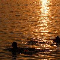 купание в вечернем золоте :: Александр Прокудин
