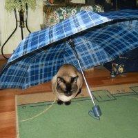 Под зонтом уютнее :: Галина