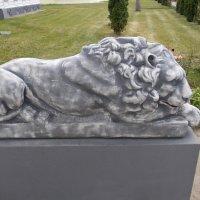 Царь зверей - тоже котик :: Викторина Срыбна