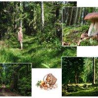 За грибами :: Алекс Штиль