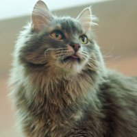 Презентация котика из котокафэ :: Albina
