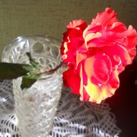 И стала огненною роза... :: Галина