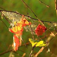 Хотите тишины... Зайдите в Осень :: Татьяна Ломтева