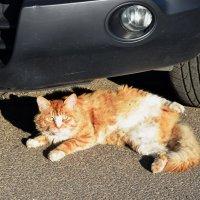 Осенний кот. :: Татьяна Помогалова