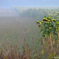 Туман на поле :: Сергей