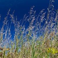 Трава на фоне синего неба :: Александр Синдерёв