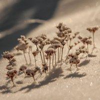 Маленько о прошлой зиме... :: Сергей Герасимов