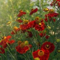 Цветы :: Ирина Демидова