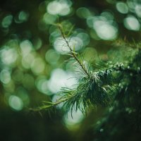 Больше зелёного цвета :: Елена Кузюткина