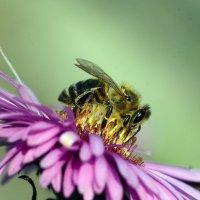 Bee :: Олег Шендерюк