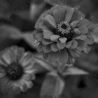 Цветы :: Екатерина Рябинина