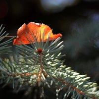 Осень. Начало. :: Ирина Сивовол