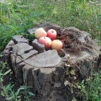 Корзинка яблок в виде гнезда Жар-птицы, которая откладывает вместо яиц яблоки!... :: Алекс Аро Аро