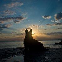 Собака и море :: Евгений Михайленко