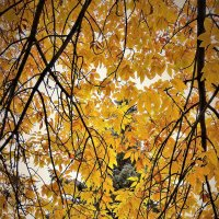 Осень в городе :: Валерий Талашов