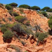 Португалия. Прибрежные скалы. :: Лариса (Phinikia) Двойникова